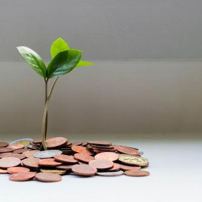 A green plant growing out of coins